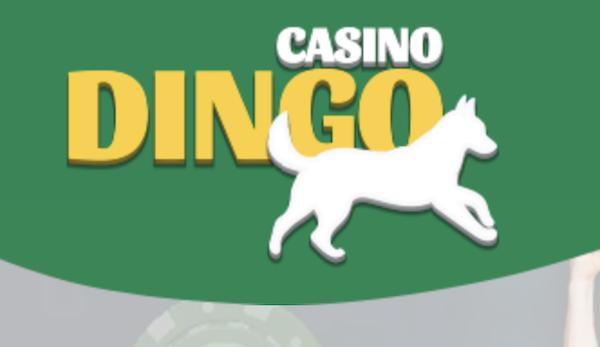 Casino Dingo: Pros & Cons
